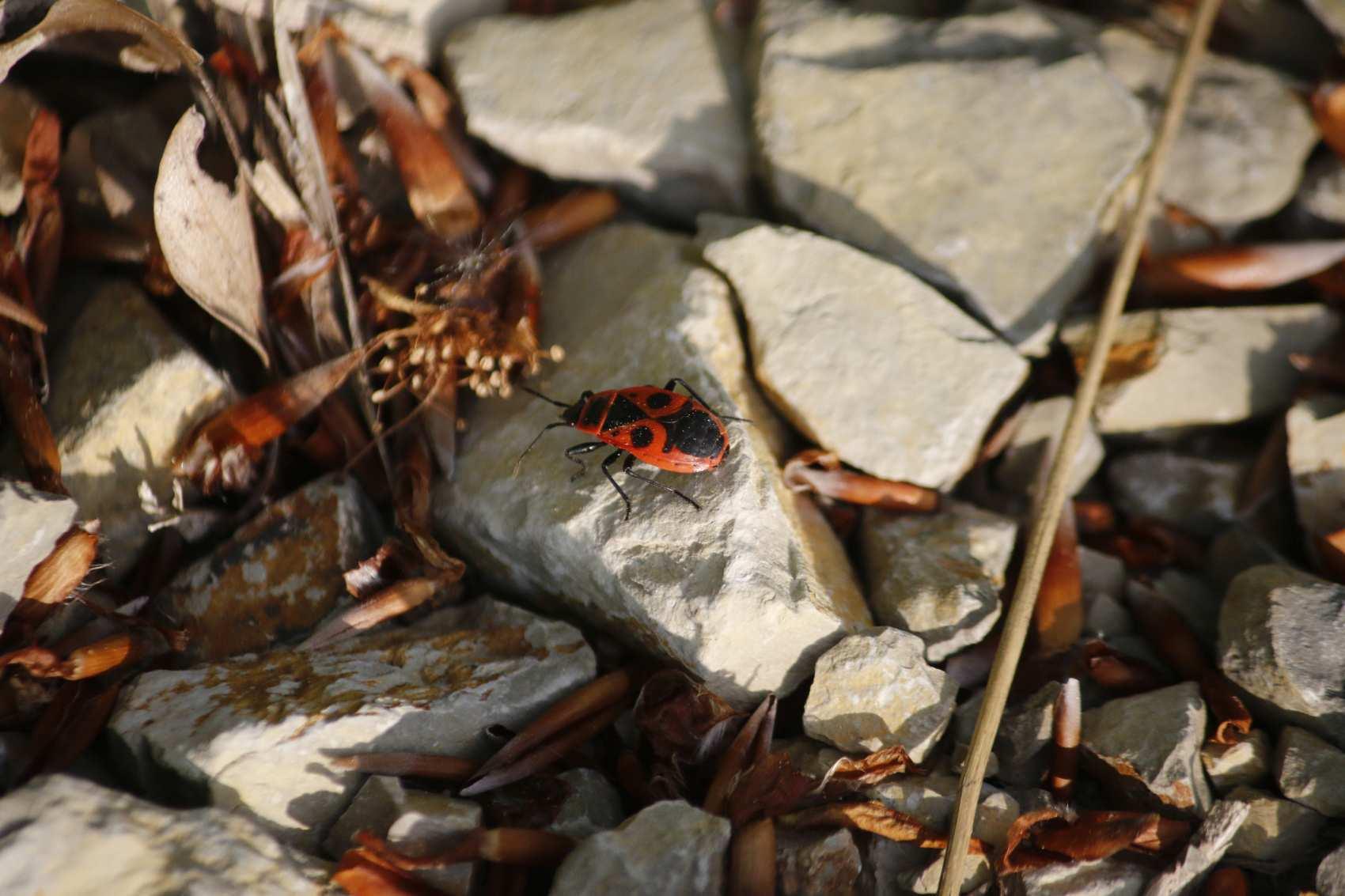 Banner-Insekten